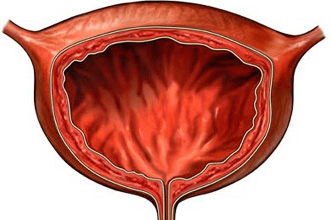 Объём мочевого пузыря и лечение мочеиспускательной системы
