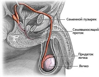 Все про орхит у мужчин: симптомы, лечение, лучшие препараты