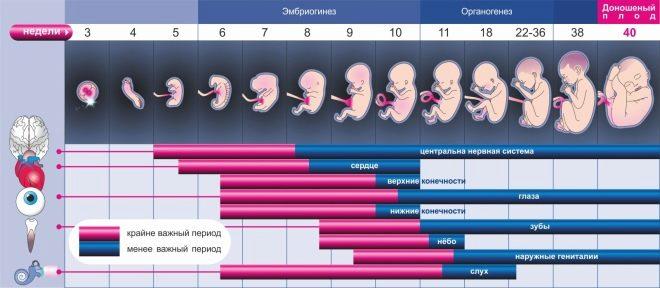 Беременность по неделям с фото и видео: подробно о каждой неделе, плоде и ощущениях