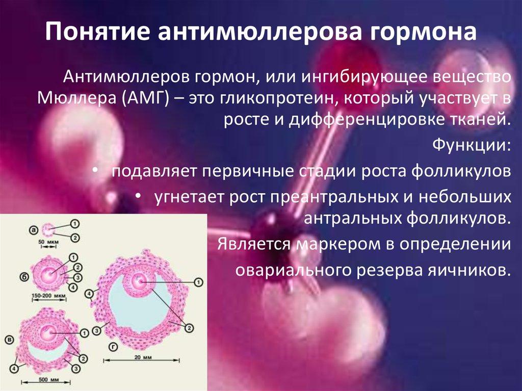 Когда и на какой день цикла сдавать антимюллеров гормон?